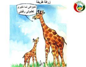 كاريكاتير المواطنة 2012